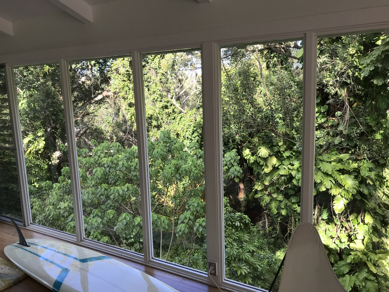 The view from one of the houses the Billabong Women's team was working in - they used the space for live video sessions